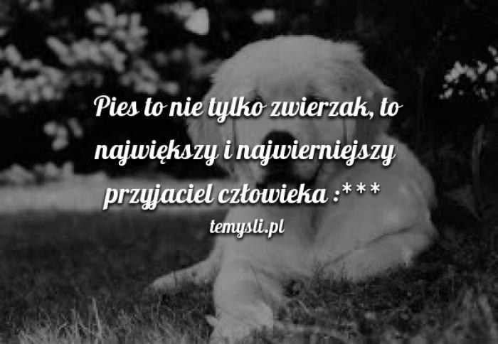 Pies To Nie Tylko Zwierzak