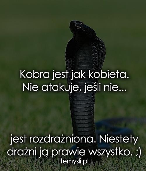 Kobra jest jak kobieta. Nie atakuje, jeśli...
