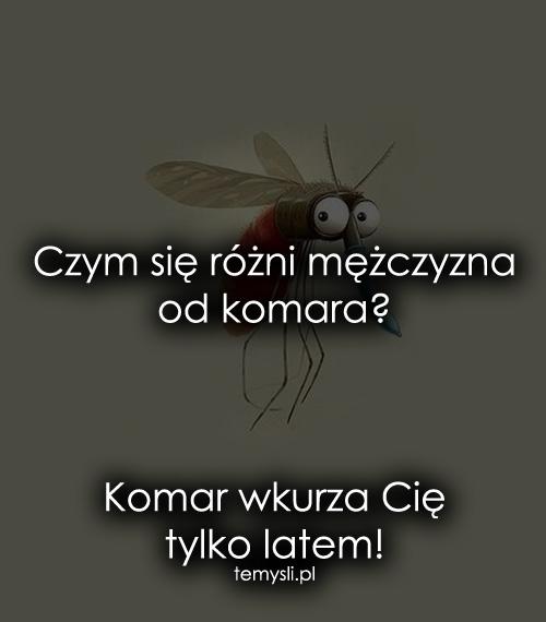 Czym się różni mężczyzna od komara?