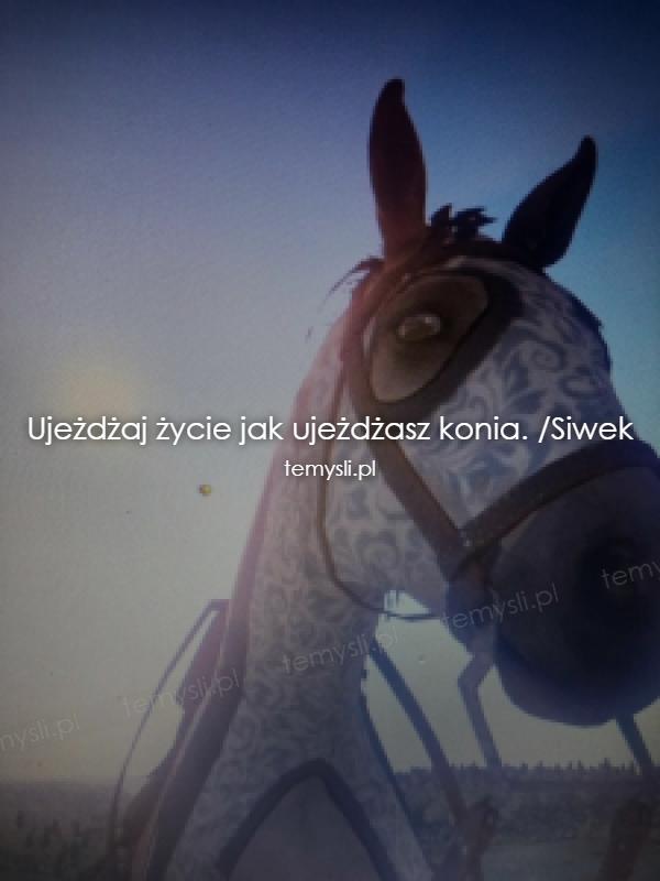 Ujeżdżaj życie jak ujeżdżasz konia. /Siwek