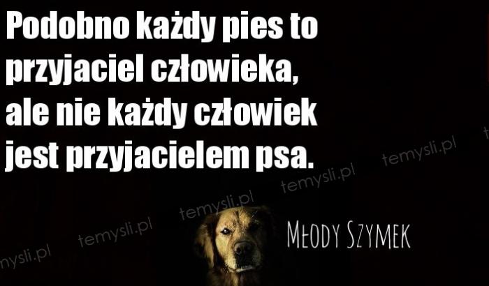 Podobno każdy pies to przyjaciel człowieka, ale nie każdy człowiek jest przyjacielem psa.