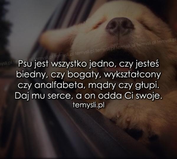 Psu jest wszystko jedno, czy jesteś..