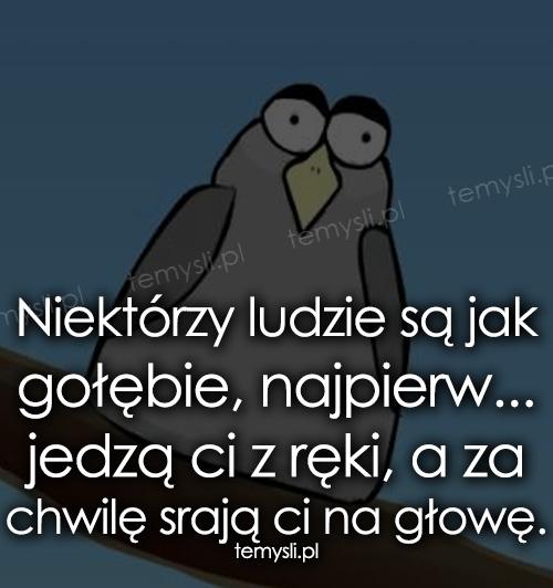Niektórzy ludzie są jak gołębie, najpierw...