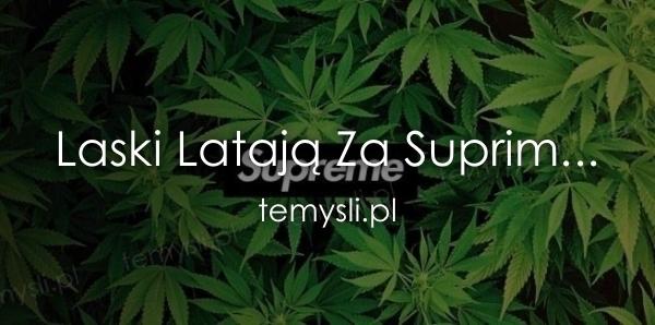 Laski Latają Za Suprim...