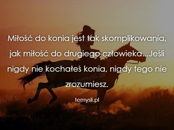 Miłość do konia jest tak skomplikowania, jak miłość do drugi