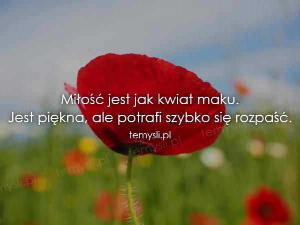Miłość jest jak kwiat maku. Jest piękna, ale potrafi szybko