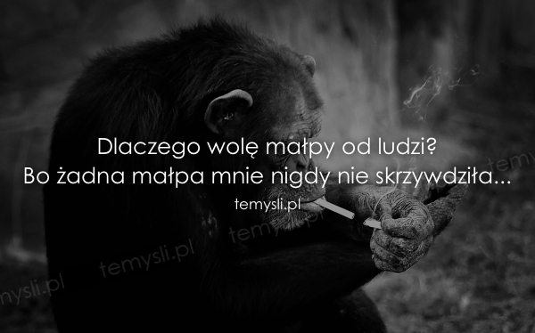 Dlaczego wolę małpy od ludzi? Bo żadna małpa mnie nigdy nie