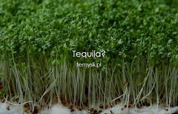 Tequila?